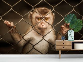 Poor monkey in the cage