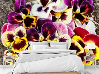 Different pansies