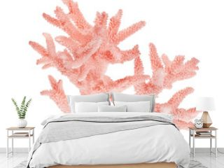 light red coral on white