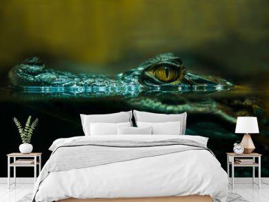 crocodile alligator close up
