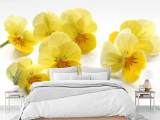 Slightly blurred yellow pansies on a white tile