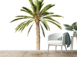 Big palm tree isolated on white