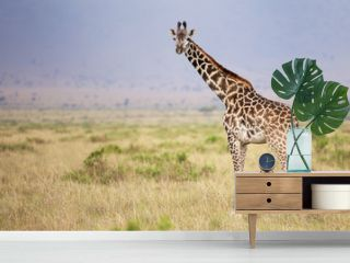 Large adult giraffe looking at the camera