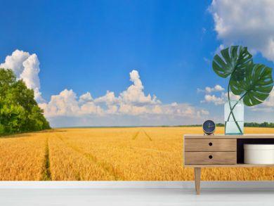 Wheat field in summer countryside