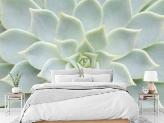 Close up of cactus texture background