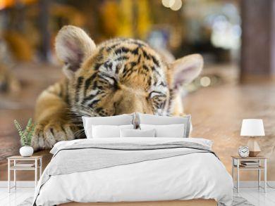 small tiger sleeping