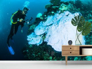 scuba diving diver kapoposang indonesia bleaching underwater