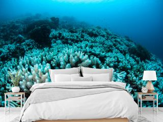 Bleached Coral Reef in Tropical Pacific