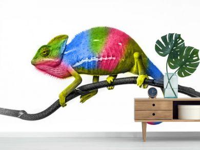 chameleon - colors