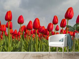 Bulb fields with tulips in spring