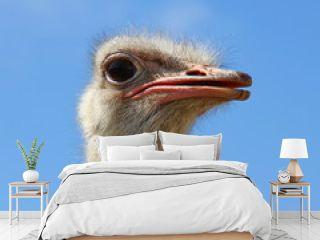 Head ostrich semi profile