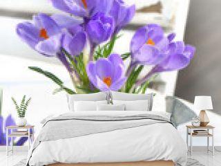 crocus dans pot arrosoir sur table en bois blanc