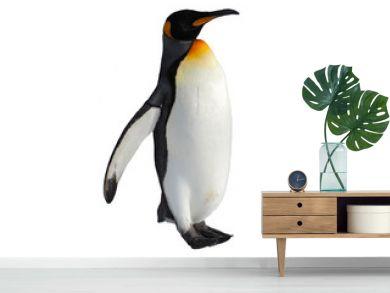 Emperor penguin walk on snow