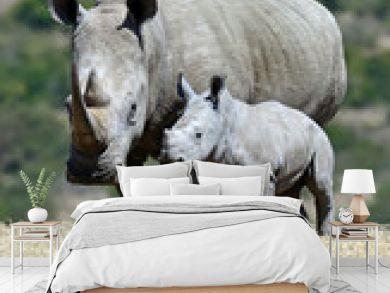White rhino in the park Solio in Kenya.