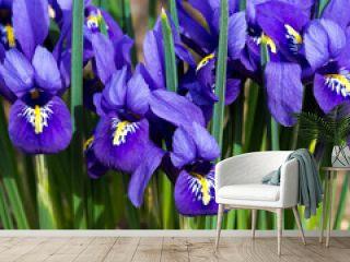 morning flower iris park