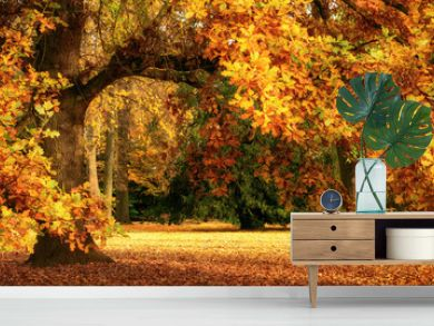 Autumn scenery with a magnificent oak tree