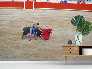 Bullfighter demonstrates his talent on a bullfighing show