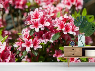A blooming azalea
