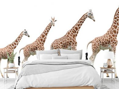 Collection of isolated giraffes in various poses