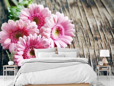 Beautiful pink gerbera flowers