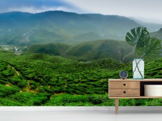 wide view the beautiful tea plantation at Cameron Highland, Malaysia. Hill curve and slope with fog, cloudy sky with cropped image restaurant.