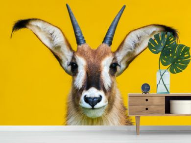 roan antelope portrait on yellow background / Pferdeantilope Porträt