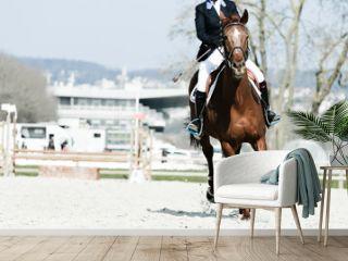 équitation cheval cavalier concours saut obstacle hippique