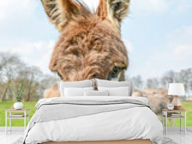 brown donkey looking at you