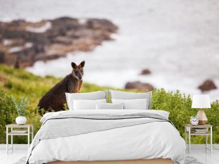 Kangaroo in the grass. Kangaroo Island, Australia