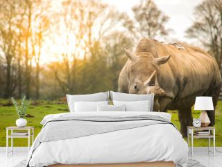 White rhinoceros in the nature