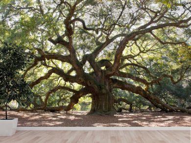 Angle Oak Tree – Majestic live oak angle tree in Charleston South Carolina