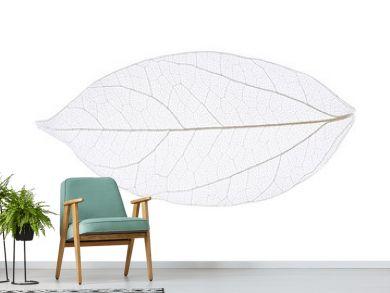 Skeleton leaf isolated on white