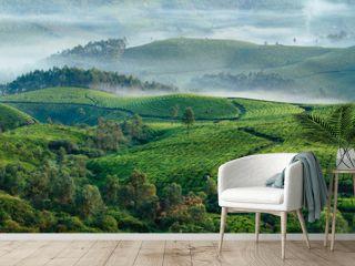 Green hills of tea plantations in Munnar