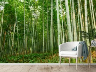 Green bamboo forest in the summer