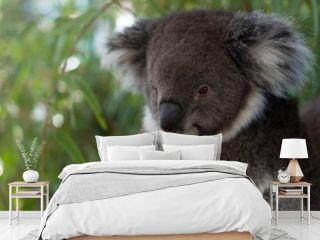 A koala bear sitting on a branch on a tree