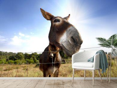 Donkey / closeup of a donkey on the field