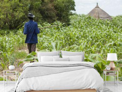 millet farming in South Sudan