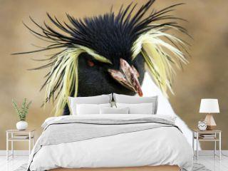 Rock hopper Penguin .