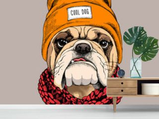 Bulldog portrait in a hipster hat and with Knitted scarf. Vector illustration.