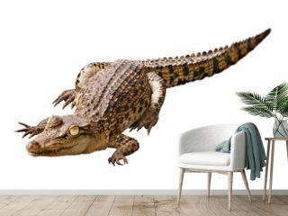 Cub crocodile isolated on white background