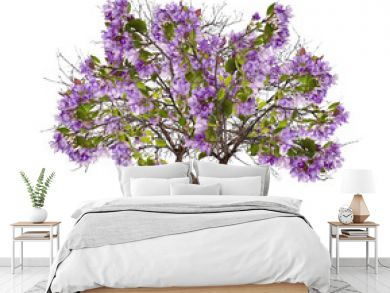 isolated apple tree with large lilac blooms