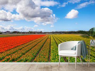 tulip field near Lisse, Netherlands
