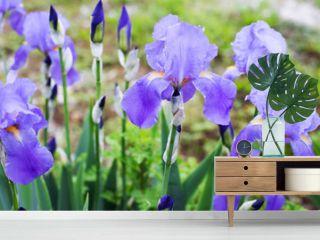 iris flowers garden