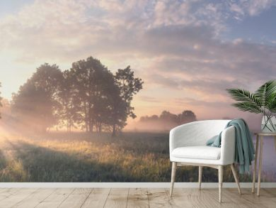 Beautiful summer morning landscape