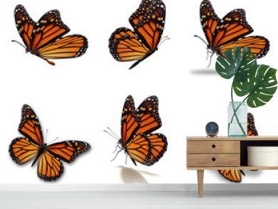 monarch butterflies set