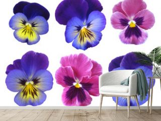 Set of pansies on a white background.