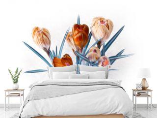spring crocus flower bouquet