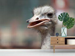 Ostrich head closeup portrait