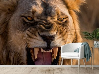 Lion Roar Up Close