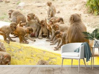 monkey family funny in nature eat